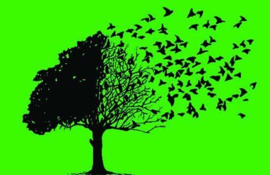 Law firm client retention: clients leaving the nest
